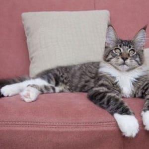 A cat lying on a sofa