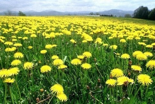 A vase of flowers sitting on top of a grass covered field