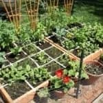 Grow Your Own Food One Square Foot at a Time