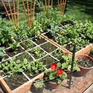 Garden in a box