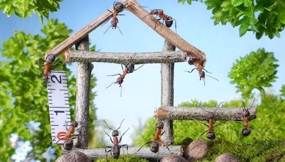 Team of pesky ants constructing a wooden house in the garden