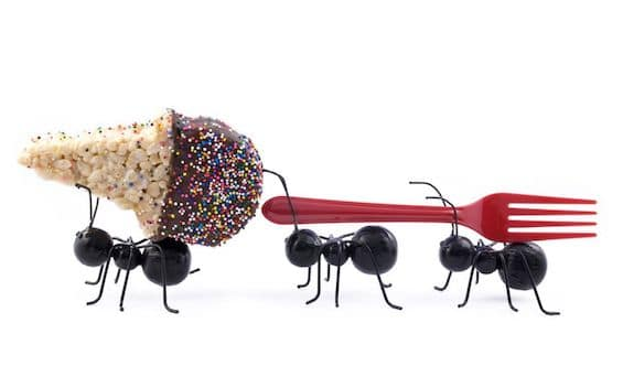 Ants carrying food and fork
