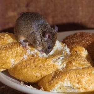 A close up of a plate of food, with Mouse
