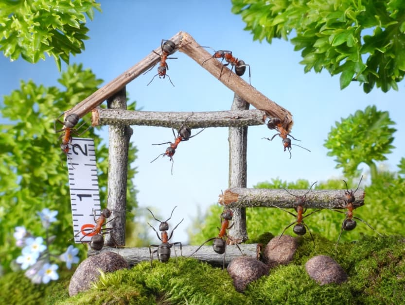 Team of ants constructing wooden house in forest, teamwork, ant tales