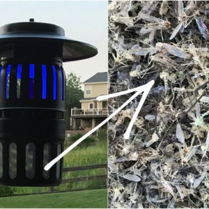 DynaTrap and a big pile of dead mosquitoes