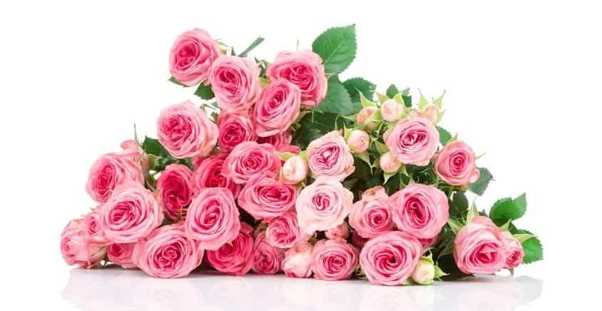 wedding-roses