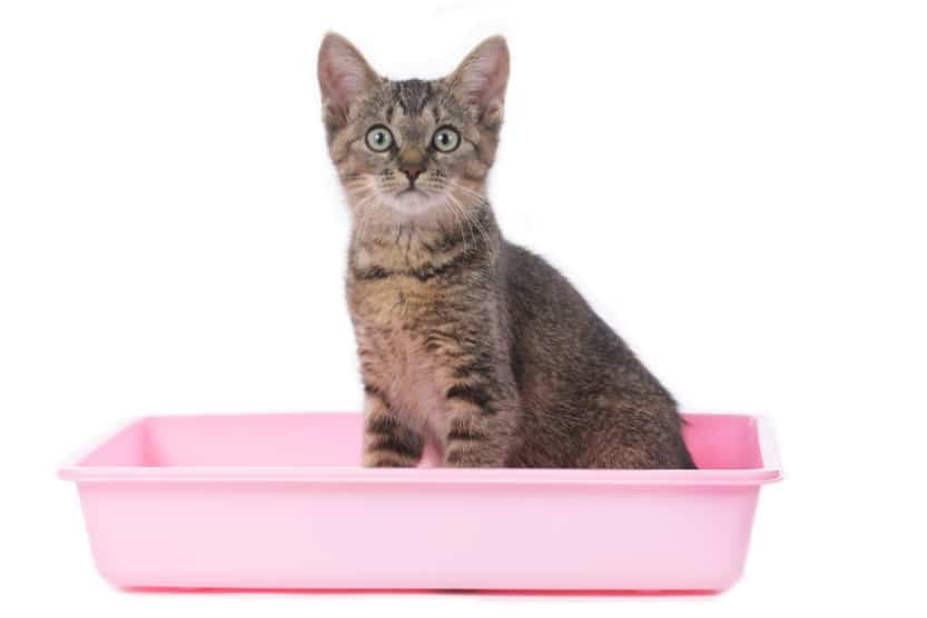 Cat Litter Box Care And Cleaning Basics, Litter Box In Unfinished Basement