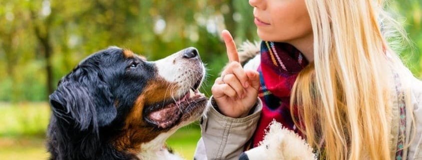 Girl-in-autumn-park-setting-training-her-dog-in-obedience-giving-the-sit-command