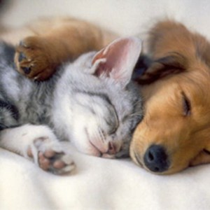 Kitten and puppy snuggling up and sound asleept