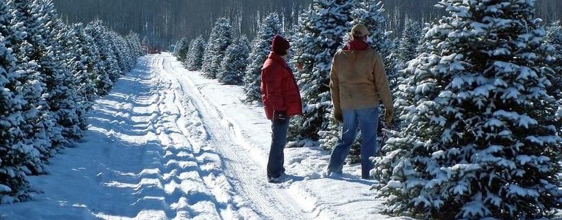 Christmas tree farm couple