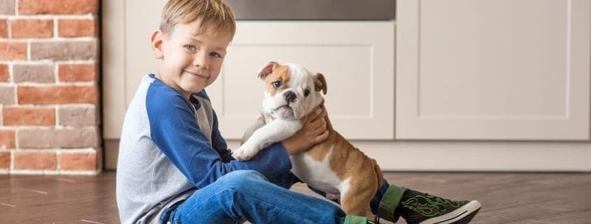 cute-boy-playing-with-new-puppy-english-bulldog-on-kitchen-floor