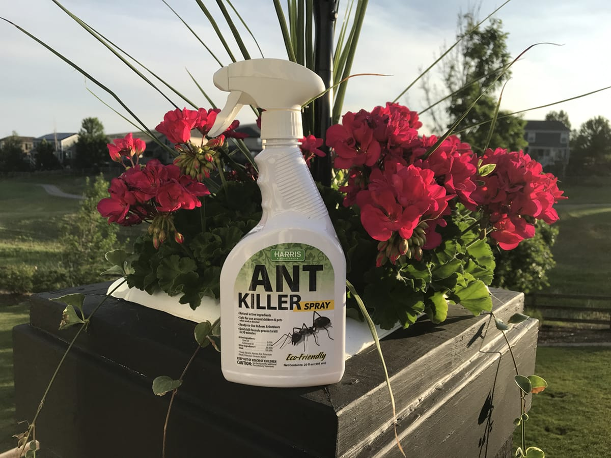 Harris Killer Ant Spray
