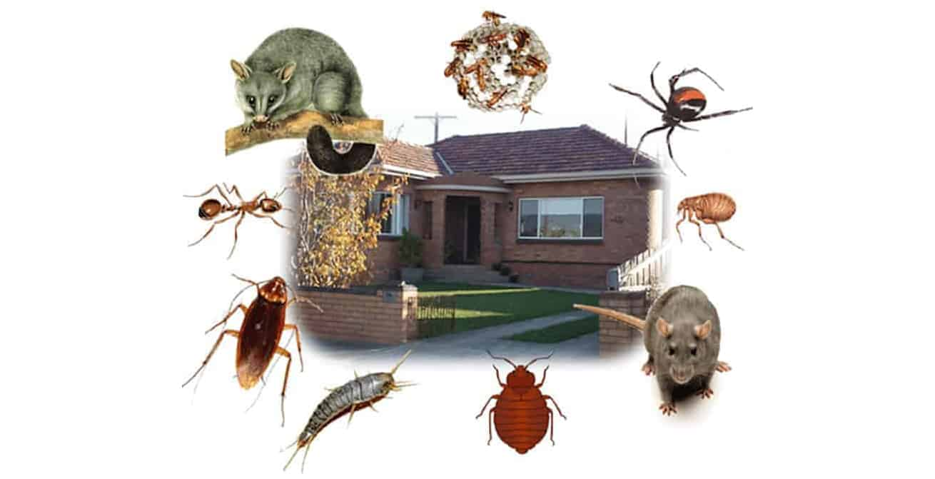 Bugs-Rodents-Natural-Pest-Control