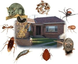 Illustration showing bugs and rodents that can be repelled with natural pest control