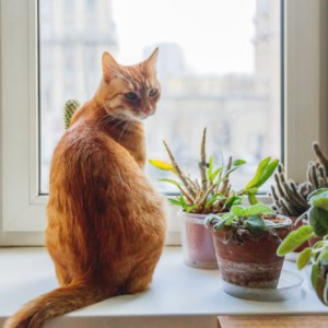 cute cate on windowsill next to potted houseplants