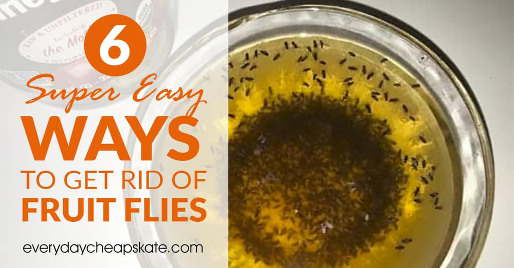 6 Super Easy Ways To Get Rid Of Fruit Flies ・ Everyday