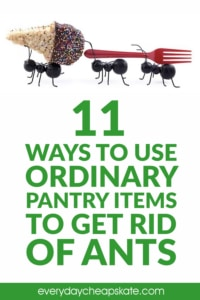 11 Ways to Use Ordinary Pantry Items to Get Rid of Ants