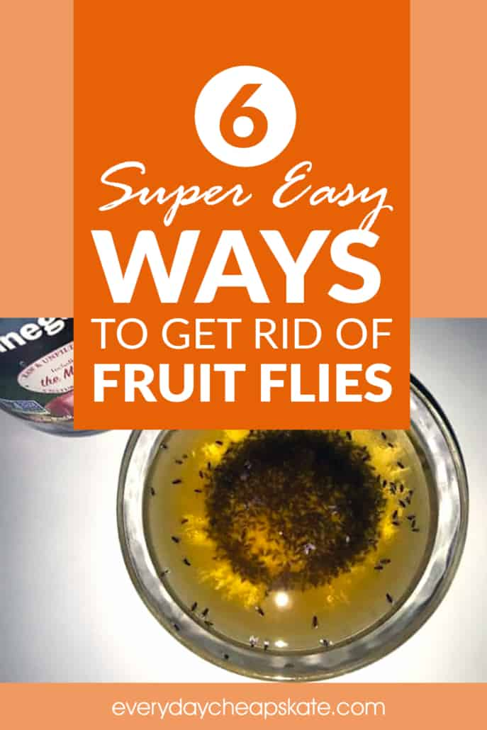 6 Super Easy Ways to Get Rid of Fruit Flies ・ Everyday Cheapskate