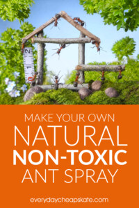 Make Your Own Natural Non-Toxic Ant Spray