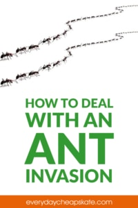 How to Deal with an Ant Invasion