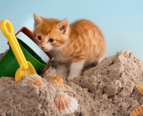 kitten-sandbox-toys