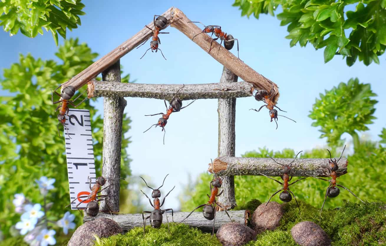 ants building a house
