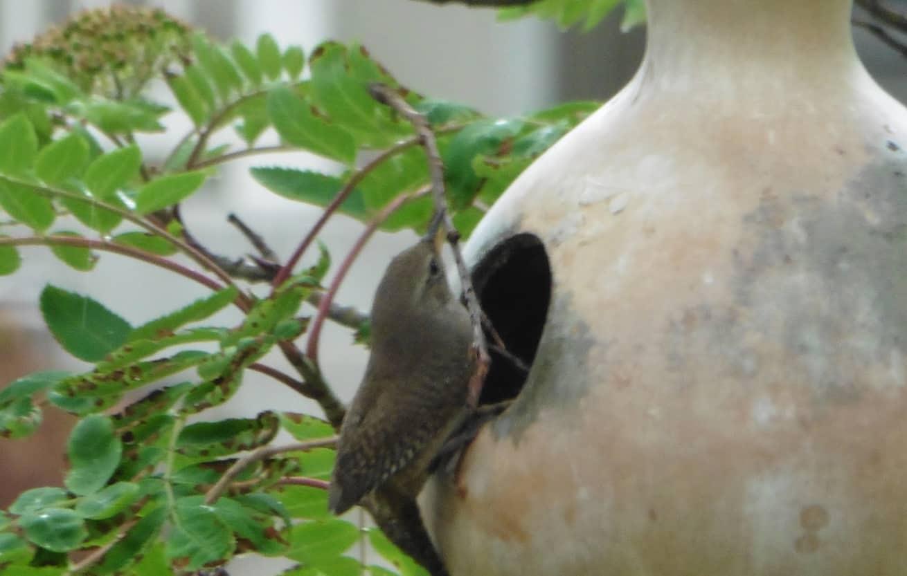 bird house in bottle