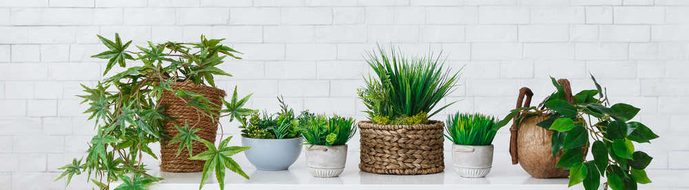 collection of houseplants in front white brick wall