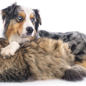 dog and cat in front of white background