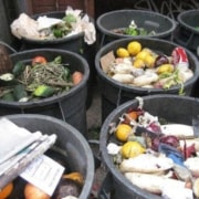 garbage cans filled with rotten produce