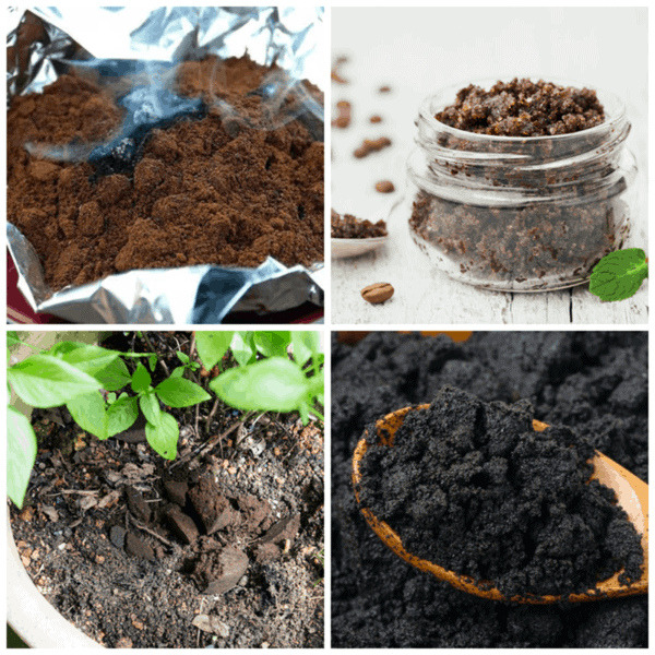 Coffee and Compost