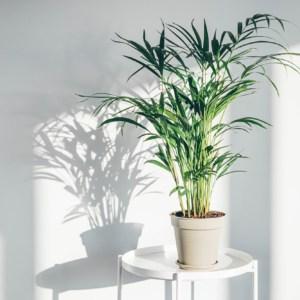 houseplant-on-white-background