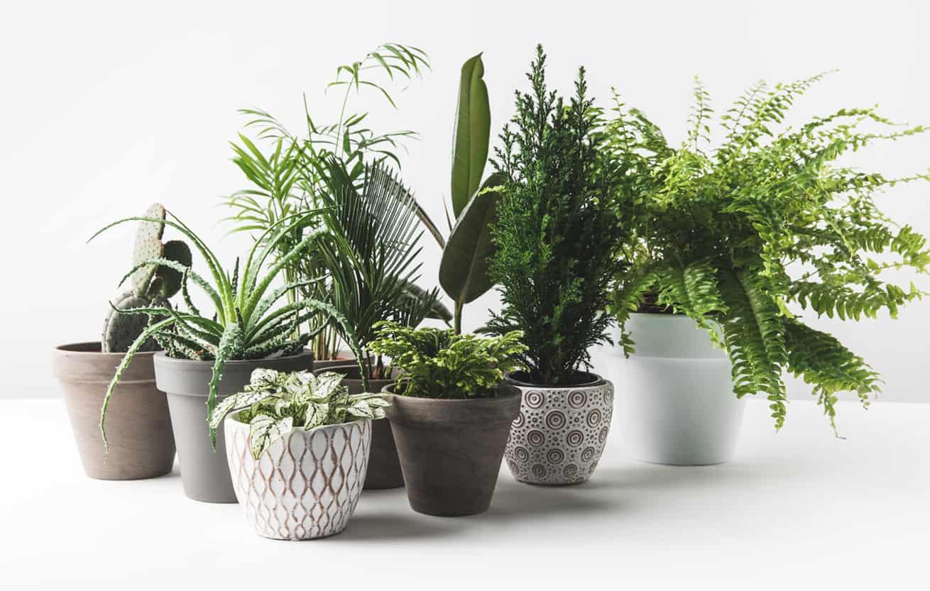 househplants in white pots