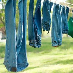 blue jeans hanging by their ankles from a clothesline in a wooded grassy area