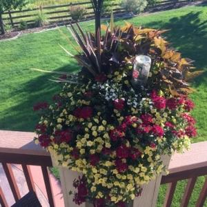 DIY plant nanny in a big beautiful flower planter
