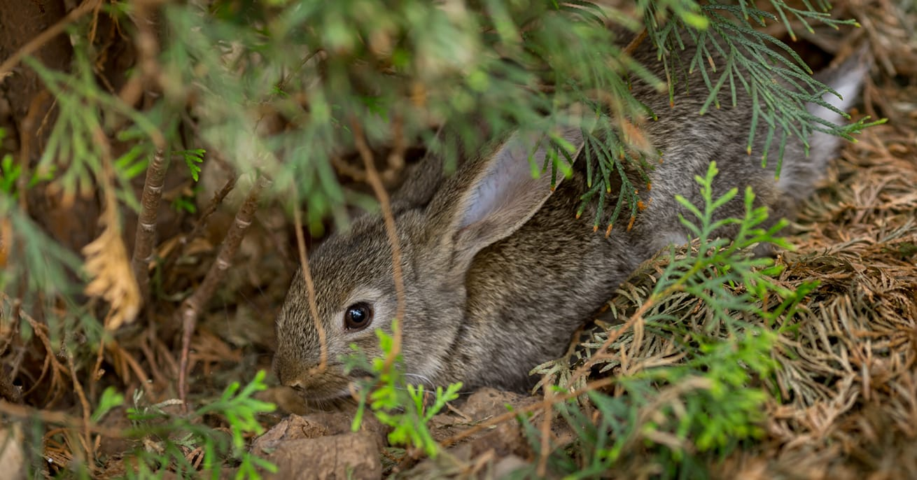Cute rabbit bunny hiding in garden