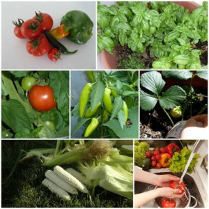 Collage of beautiful homegrown vegetables