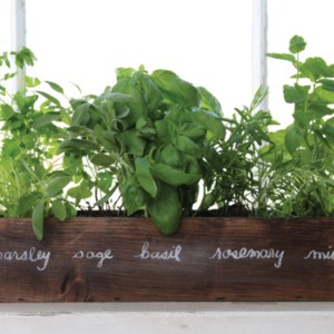 herbs labeled and growing in a wood planter box sitting in a windowsill