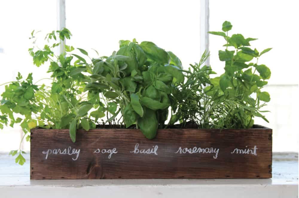 windowsill garden in wood box labeled with herbs growing in it